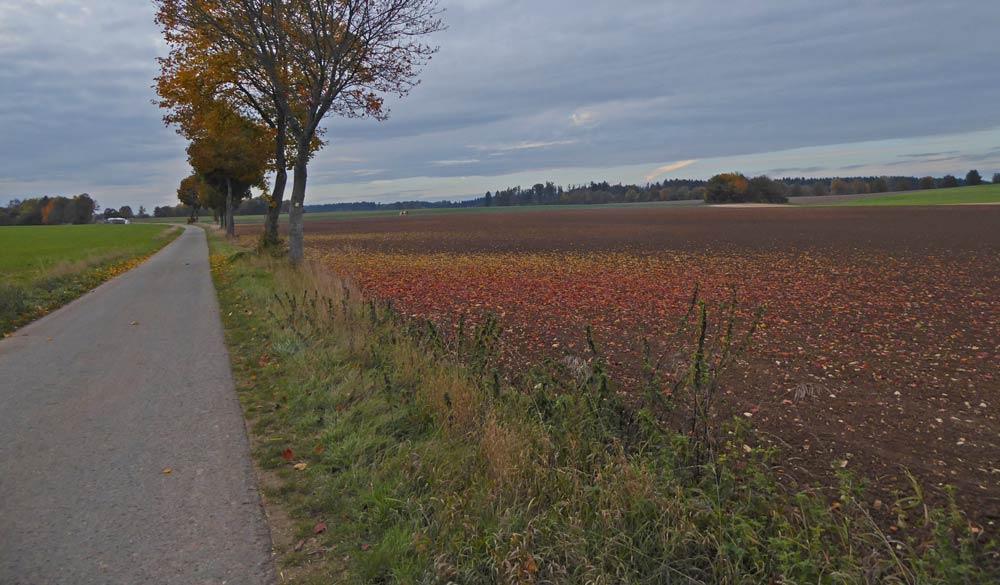 buntes Laub Acker Herbst