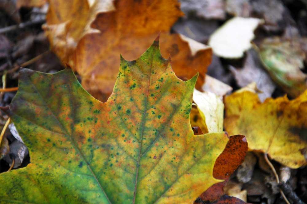 Herbst Altmühltal