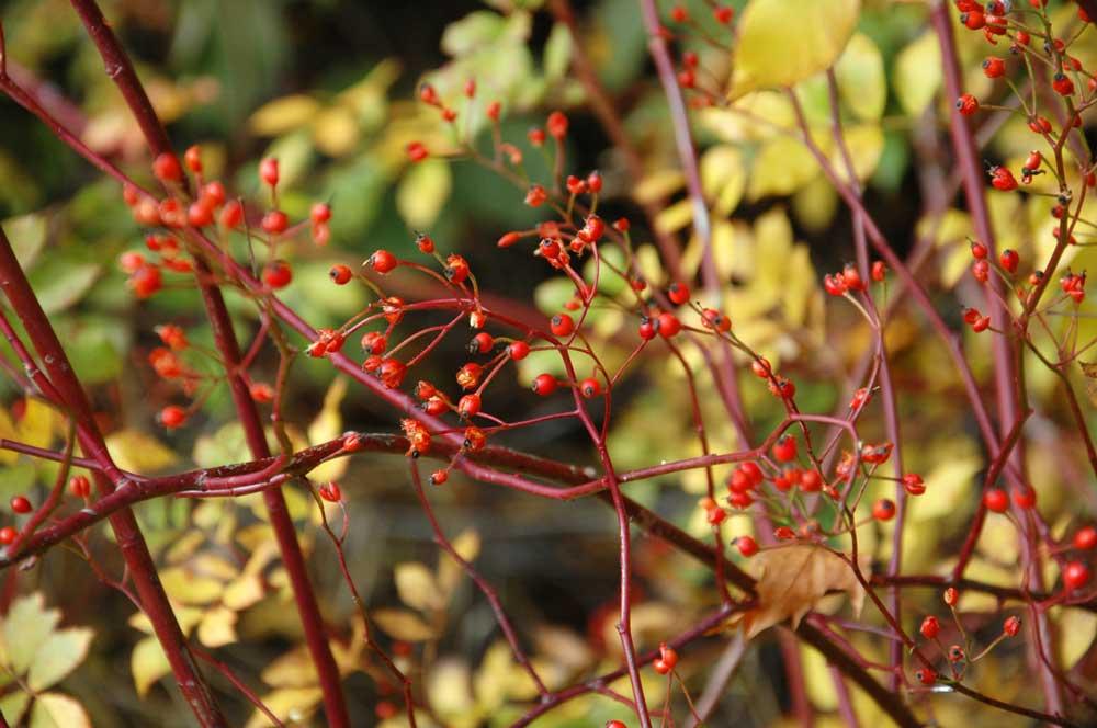 Herbst Altmühltal Kerstin Siebentritt