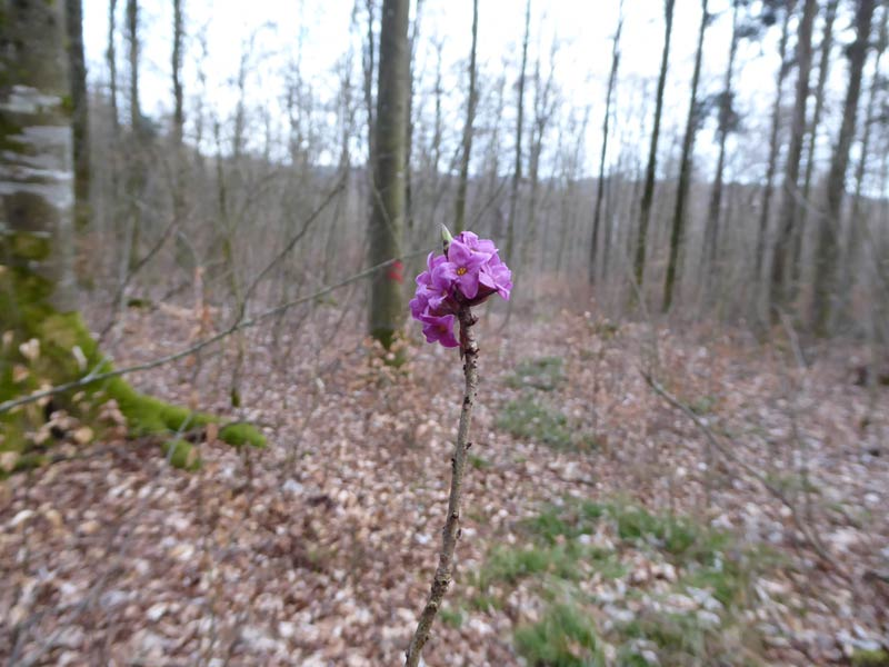 Blume Frühling
