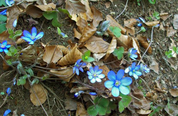 Frühjahrsblüher im Altmühltal