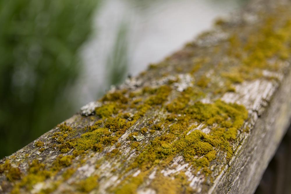Moos auf Holz