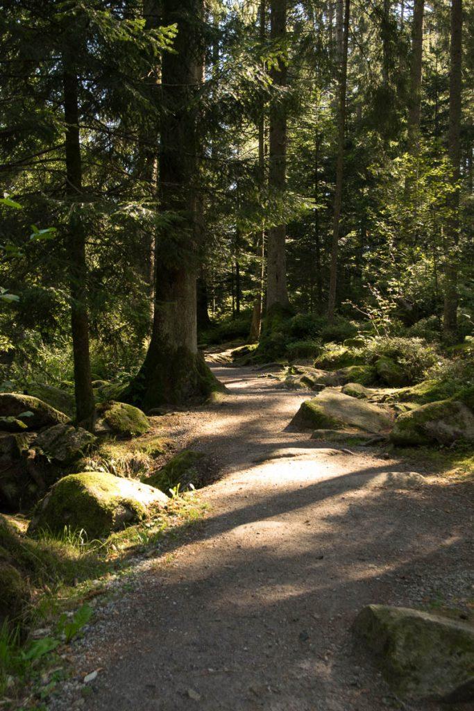 Klamm-Wandern Bayerischer Wald