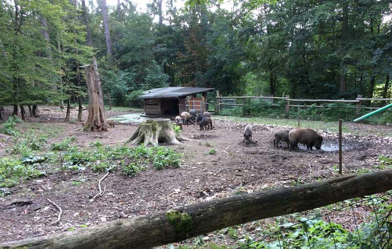 Geländer Altmühltal Wildschweine