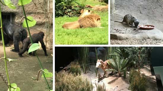Warnemünde Zoo