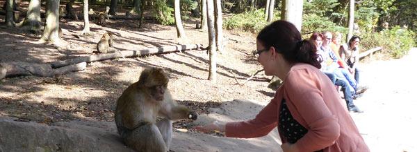Affenpark Elsass