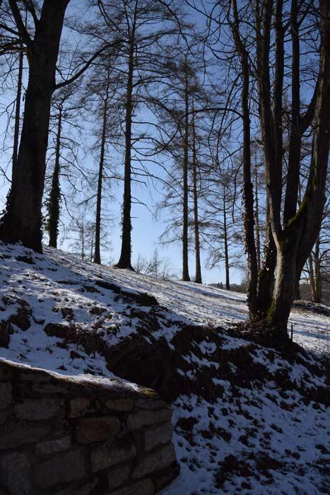 Winter Bäume Wald Willibaldsburg