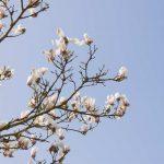 Frühling Baum Knospen