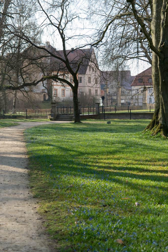 Blausternchen im Ellinger Schlosspark