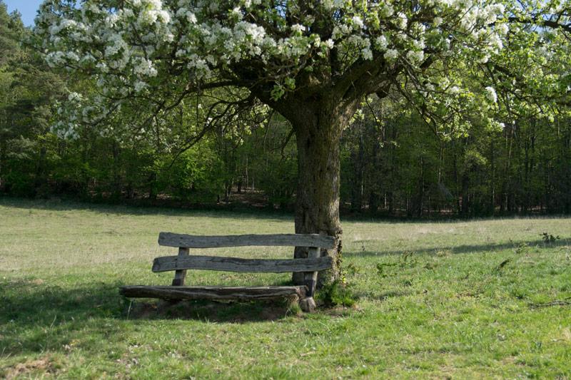 Hesselberg Kirschblüten